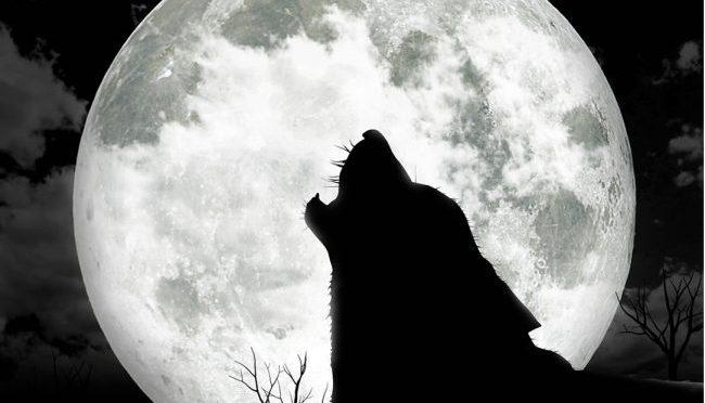 Full Moon Hash #156 – Nov 10