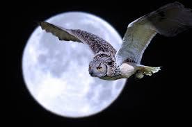 Full Moon Hash #155 – October
